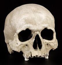 Totenkopf Replikat - Nahira - Menschen Schädel - Anatomie anatomisch Figur