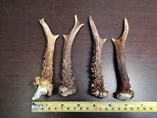 Lot of 4 Small Roe Antlers For Art Design Decorations Handles Crafting # 4060