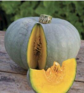 🏵Organic Rare Australian Queensland Blue Giant Pumpkin vegetable Seeds 🏵