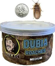 Dubia Roaches Pet Reptile Food - Jungle Bob's Lizard Cockroach In-A-Can Feed New