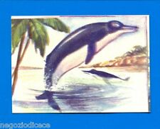 ANIMALI - Lampo 1964 - Figurina-Sticker n. 171 - INIA O BOTO -New