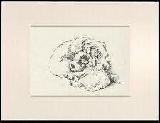 SEALYHAM TERRIER MUM & PUP ASLEEP CUTE LUCY DAWSON DOG ART PRINT READY MOUNTED