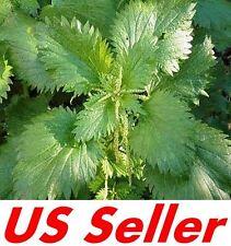 Stinging Nettle Seeds E114, 200 Seeds, Urtica Dioica Seeds, Garden Vegetables