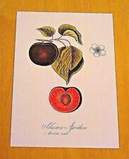 RHS FRUIT POSTCARD ~ 'SCHWARZE APRIKOSE: ABRICOT NOIR' ~ JOHANN KRAFT, 1797