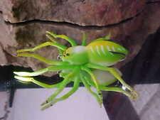 2019 Icast Winner Lunkerhunt Topwater Hollow Body Phantom Spider color Leaf
