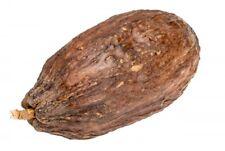 NaDeco® Kakao Schote geöffnet ohne Bohnen | Kakaoschote | Kakaofrucht | Kakaoboh