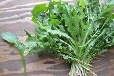 150 Graines de Pissenlit Dent de Lion Méthode BIO legumes salade plante potager