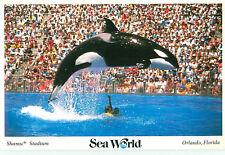 Vintage Postcard Sea World Shamu Stadium Orlando Florida   # 1637