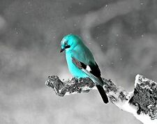 Teal & Gray Home Decor Wall Art Photo Print Bird B&W Matted Bedroom Picture