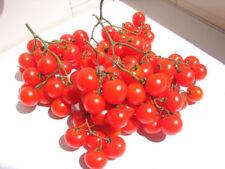 Tomato Reisentraube Cherry 100 Seeds ORGANIC / NON GMO