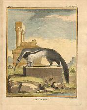 Anteater, Le Tamanoir, by De Seve, Natural History, Vintage 1749, Antique Print,
