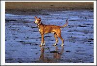 Neue Motiv-Postkarte Thema Hunde Dogs Dog Hund trottet am Wattenmeer