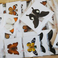 1Pc  Butterfly Specimen Folded Real Insects Wholesale Butterfly 2020 hot