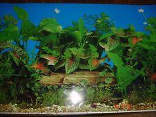 Sfondo Acquario Per Fish Tank 40 x100 CM POSTER