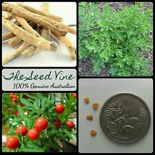 10+ INDIAN GINSENG SEEDS (Withania somnifera) Ashwagandha Medicinal Edible