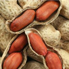 Seeds Peanuts Arachis Valencia Ukrainian Red Vegetable Organic Heirloom NON-GMO