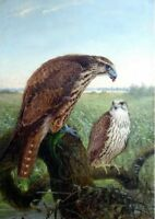 "high quality oil painting handpainted on canvas ""Falcons """