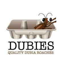 20 Medium Quality Dubia Roaches -Fully Gut loaded Premium Organic Food/Hydration