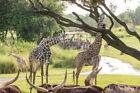 Walt Disney World Animal Kingdom Orlando Florida 1/23-30 7NT,1 BDRM,2 BATH,SLP 5