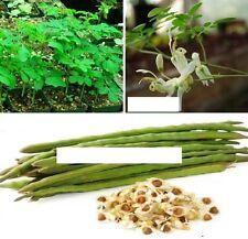 15x Moringa oleifera Samen Hingucker Pflanze Rarität Alles essbar gesund #105