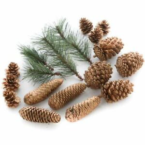 Pine Sprigs and Gold Pinecones - Christmas Holiday Decorating Kit