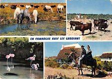 BT8212 En camargue avec les gardians horses chaveaux cow vaches fla       France