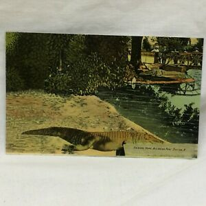 Vintage Postcard Dayton Ohio Soldiers Home Alligator Pool Scene Wetz