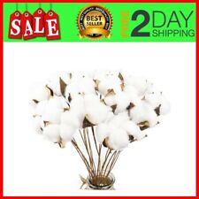20Pack Really Natural White Cotton Stems Dried Flower Branch for Farmhouse Style