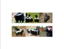 Skunks Custom Notecards ~ Pack of 6 (Blank) by Gifted Pet Creations