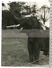Prensa original de foto: 1955 Tarzán Gordon Scott saving Elephant at craigend Castle