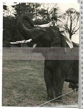 Prensa original de foto: 1955 Tarzán Gordon Scott saving Elephant at craigend Castle