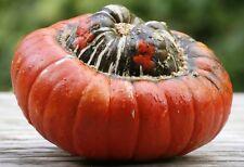 8 Graines Courge Giraumon Méthode BIO seeds plantes légumes potager ancien rare