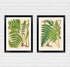 FERN ART PRINTS: Vintage Botany Plant Watercolours