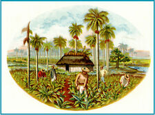 "16x20""poster on CANVAS.Room Interior art design.Tobacco Cuban cigar label.7456"
