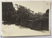 PHOTOGRAPH Tresco Abbey Gardens 8.3cm x 6cm 1938 Isles of Scilly PATH Plant 1052