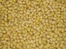 10 kg Sojabohnen Sojamilch Tofu Sojasprossen angbaut in Bayern letzte Ernte TOP