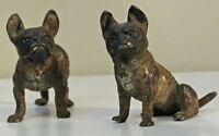Bronze de vienne fin XIX ème couple de Bouledogue Miniature rare (geschützt)