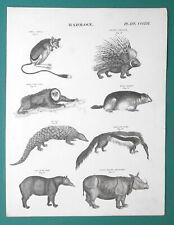 Mammals Jerboa Porcupine Tapir Ant Eater Rhinoceros Sloth - 1818 Antique Print