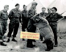8x10 photo Wojtek (4) 1942-1963 The Polish Soldier Bear in 1943