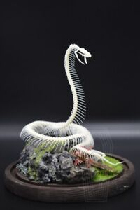 90cm Real Snake Skeleton Skull Animal Specimens, Carfts Skull Halloween Gift