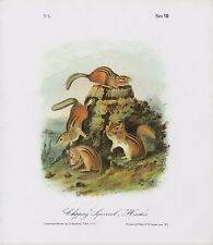 """1989 Vintage """"CHIPPING SQUIRREL, HACKEE"""" AUDUBON MAMMAL COLOR Art Lithograph"""