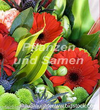 Japanische Blumen Wiese Mix elegante 1000 Seme oltre 50 Tipi nessuno Erba