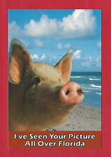 I'VE SEEN YOUR PICTURE ALL OVER FLORIDA BEAUTIFUL POSTCARD UNUSED UNPOSTED