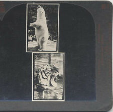 STEREOVIEWS, SET OF EYE EXAM CARDS. VARIOUS PLANTS AND ANIMALS IN THE IMAGES.