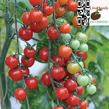 Tomato 'Sweet Aperitif' 20 Finest UK Crop Seeds