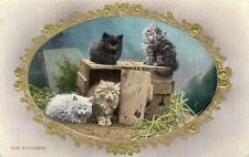 Cat Wildt & Kray Collectable Animal Postcards