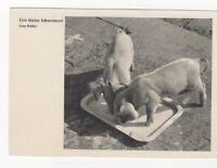 Eine Kleine Schweinerei Germany Pigs Vintage Postcard 091b