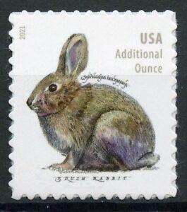 USA 2021 MNH Wild & Domestic Animals Stamps Rabbits Brush Rabbit 1v S/A Set