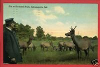 INDIANAPOLIS INDIANA ELK AT RIVERSIDE PARK  POSTCARD