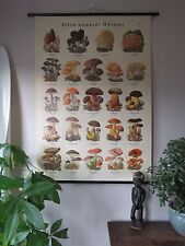 VINTAGE PULL ROLL DOWN SCHOOL WALL CHART POSTER OF MUSHROOMS FUNGI FORRAGING